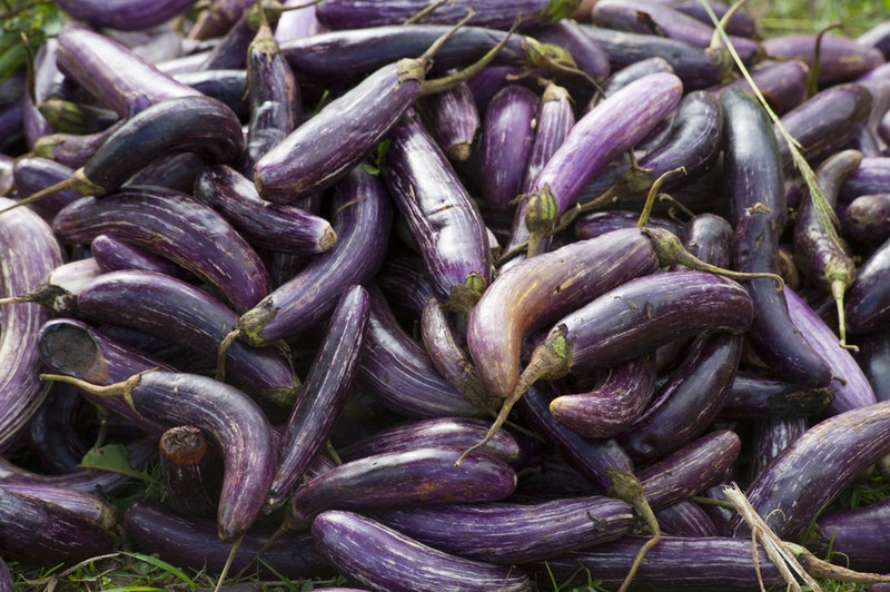 Eggplant: the Good and the Bad